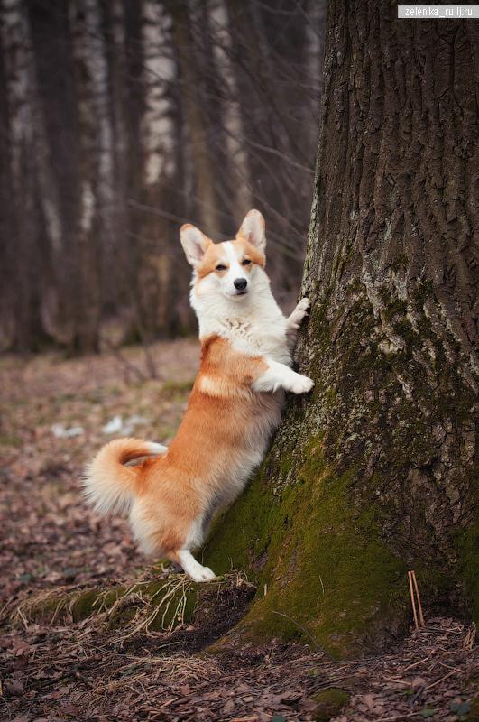 пофотографирую Ваших собак! - Страница 3 0_15ce83_47e4332e_orig
