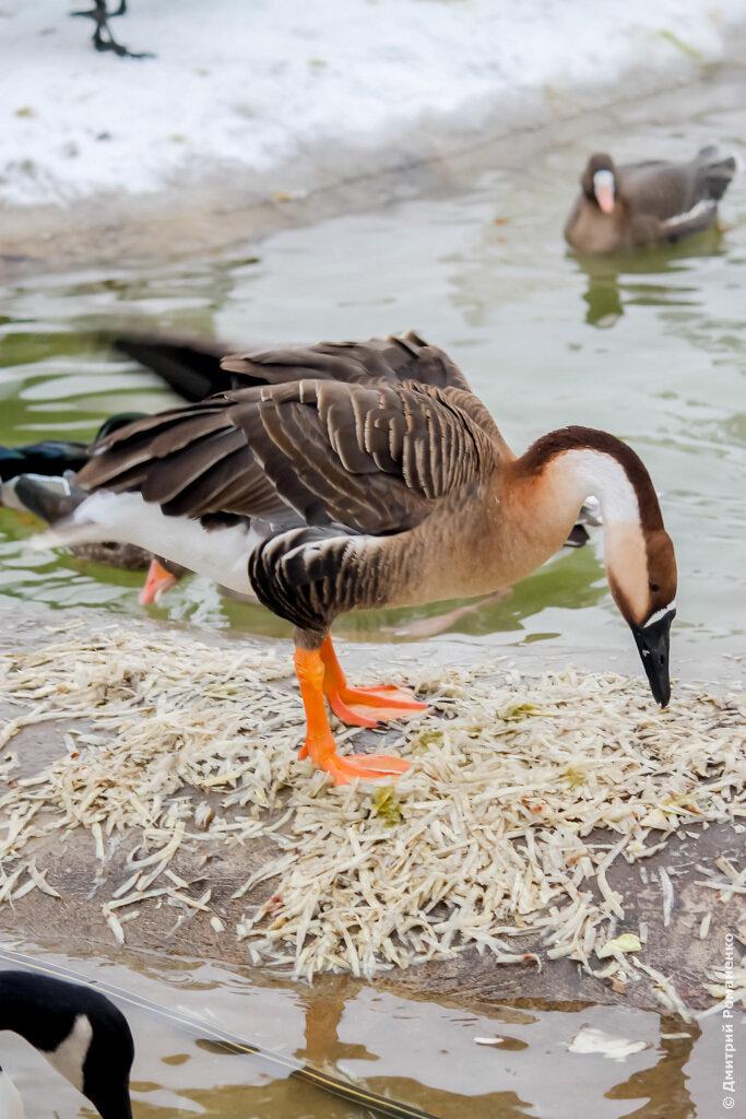 птичье царство, грайворон, грайворонский район, белгородская область, зоопарк, птицы, птица