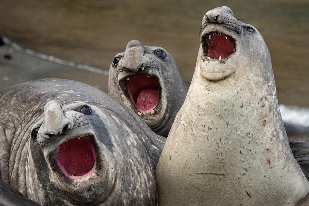 8. Святая троица. (Фото Carl Henry | The Comedy Wildlife Photography Awards):