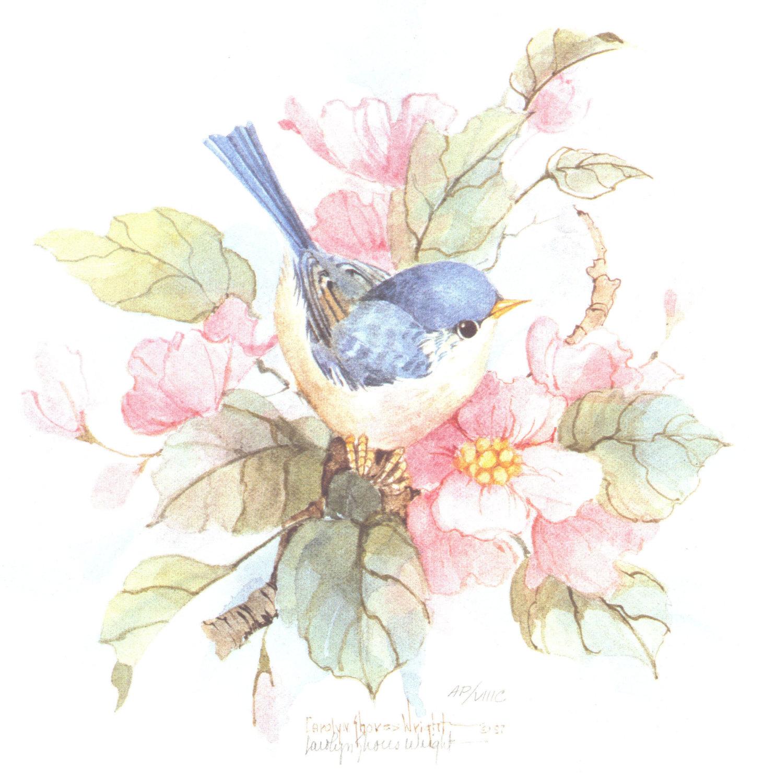 Птичка картинки