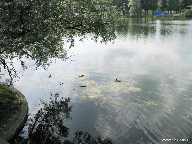 Московский парк Победы. Каналы и озёра парка заполнены довольными утками.