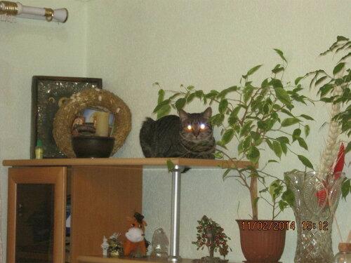 Отражение блеска вспышки в глазах стороннего наблюдателя