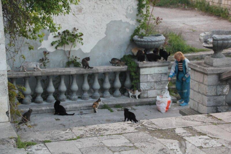 2014 05 02 Кормление кошек.JPG
