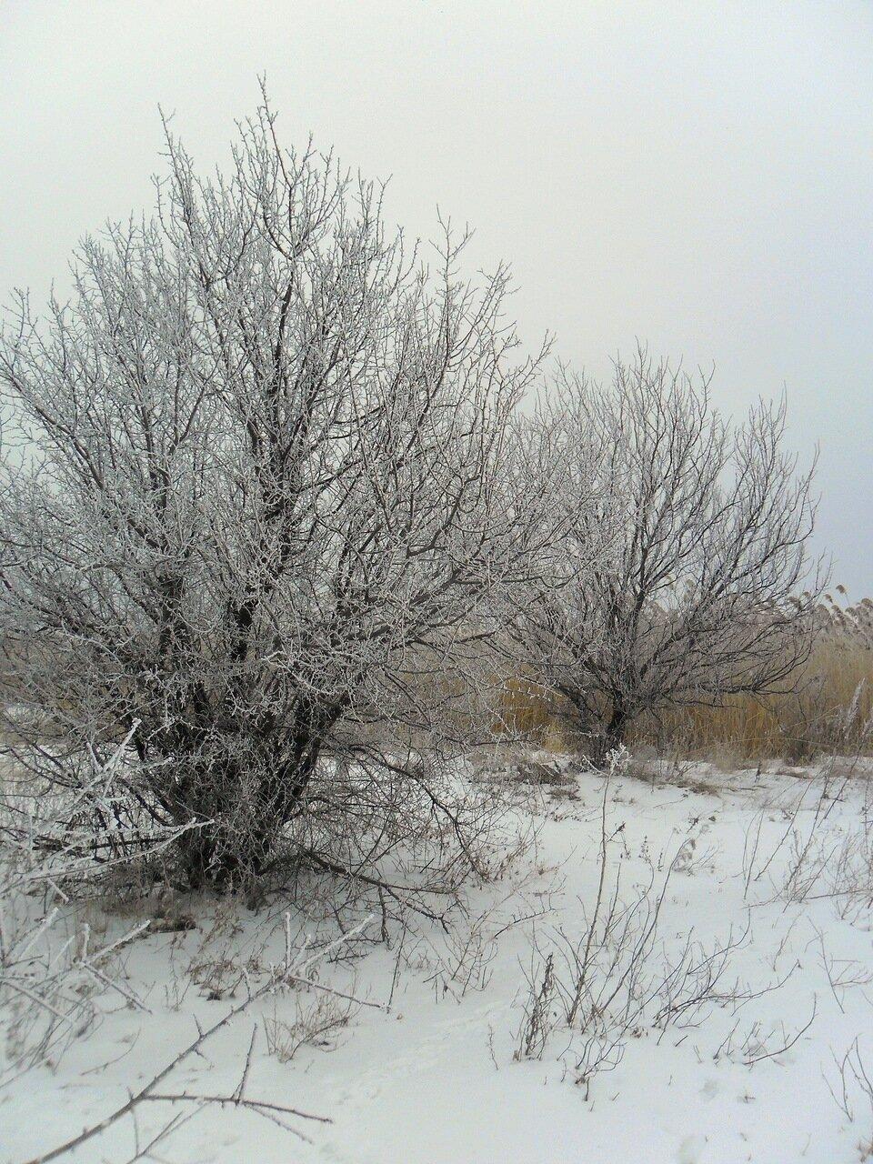 Зимой, на природе