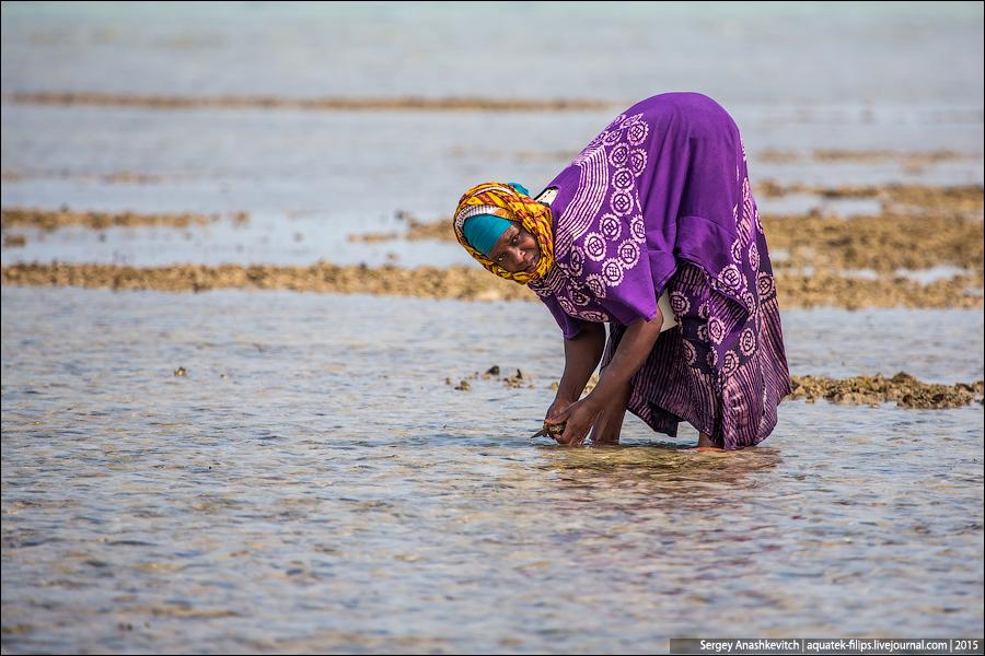 Сборщицы моллюсков на Занзибаре