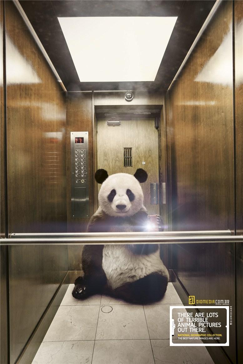 Рекламная кампания сервиса стоковых фотографий Diomedia - National Geographic Collection - Panda
