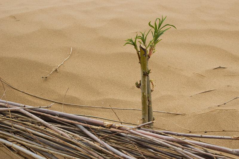 сети дял удержания песка в пустыне Кубучи (пески Кузупчи, Kubuqi desert)