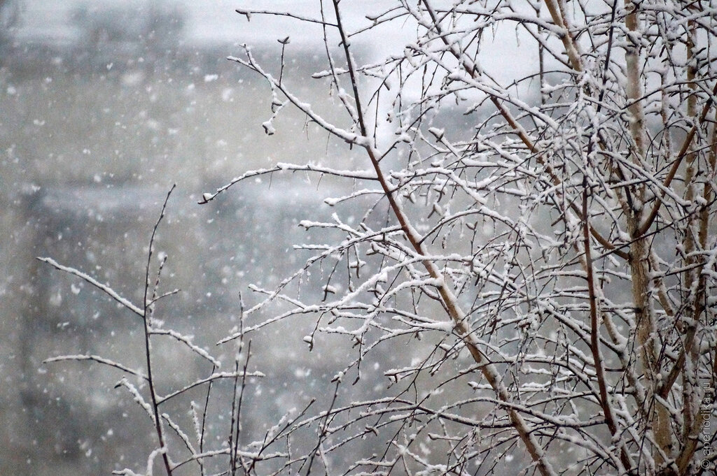 Снег на березах