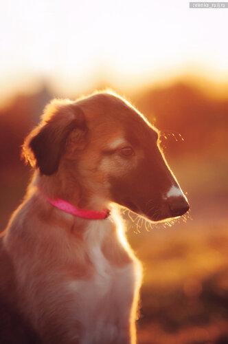 пофотографирую Ваших собак! 0_15d5d6_e8a10566_L