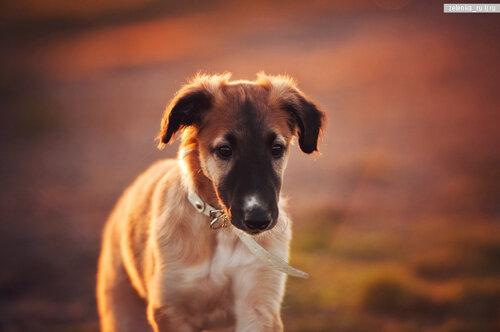 пофотографирую Ваших собак! 0_15d5e3_d5736175_L