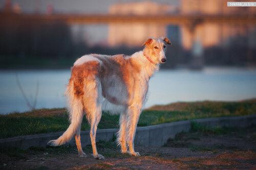 пофотографирую Ваших собак! 0_15d5f0_bccae161_L