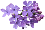 Flower Hallow (6).png