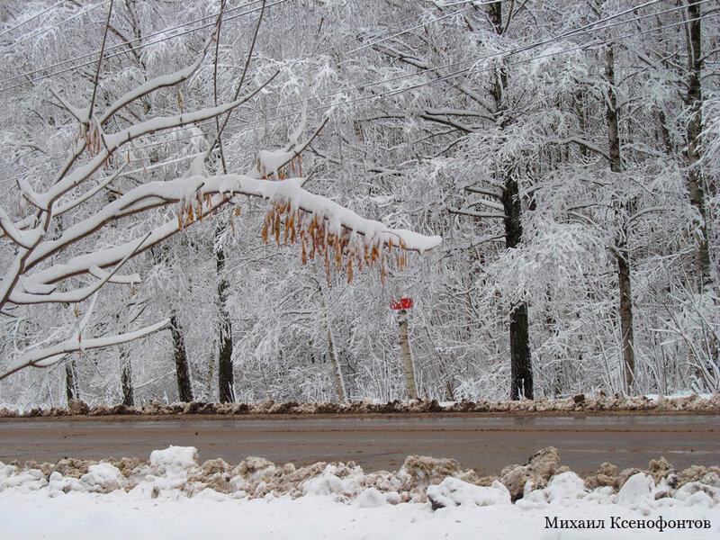 снежная роща