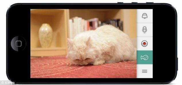 устройство которое позволяет поиграть с оставленной дома кошкой
