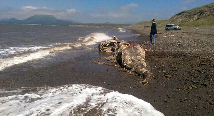 В Шахтерске обнаружили останки неизвестного животного