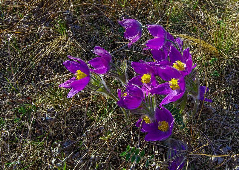 картинки цветы хакасия зал для индивидуальных