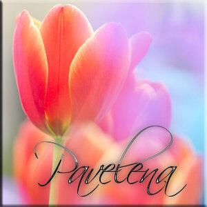 цветок, бутон, алый, нежность, яркий, весна, тюльпан, размытость, красный
