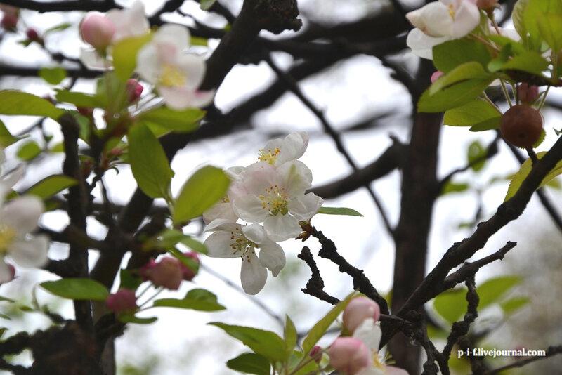 Цветы, весна, Франция