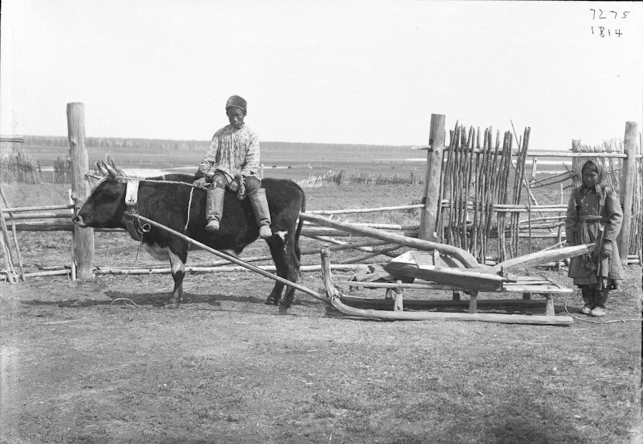 Возвращение с пахоты, 1902