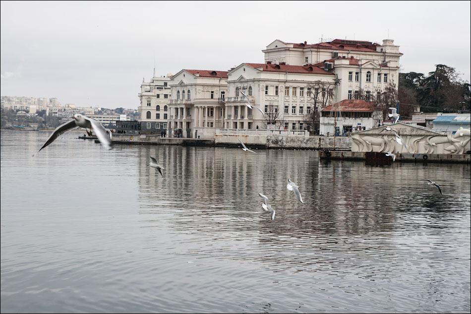 Прогулка по городу с чайками, утками и лебедями...