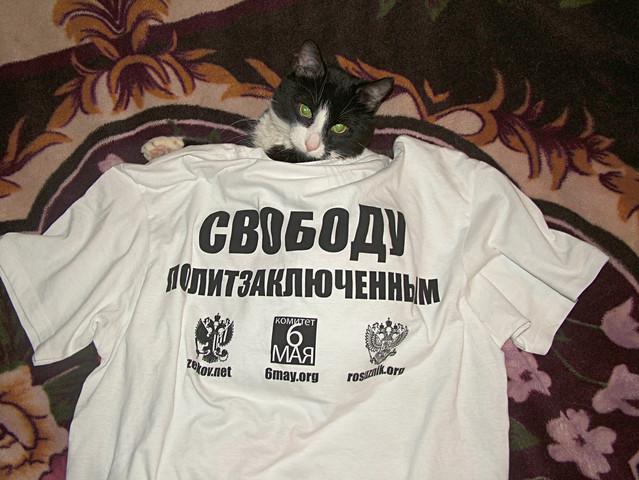 Кот, и тот понимает