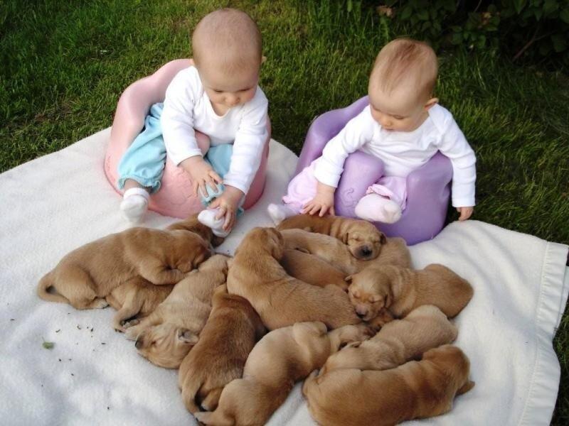 Paige_Claire_Pups.jpg