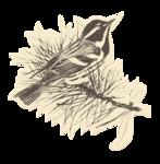 Vpearce_JB_cutout-bird.png
