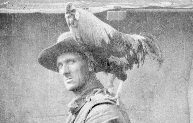 Петух Джек из 2-го дивизиона войск связи на плече капрала Уолтера Генри Фаррелла