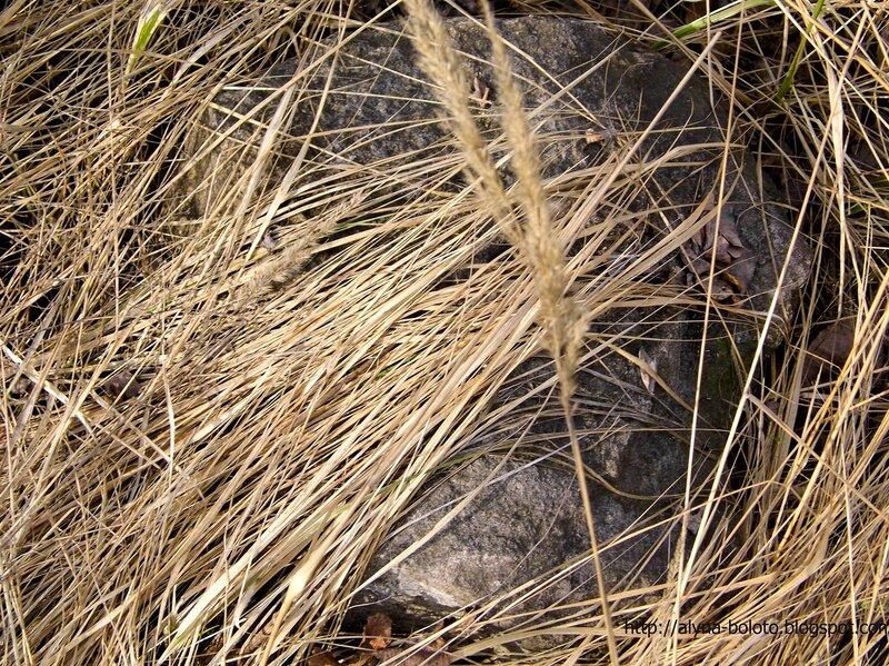 камень в траве