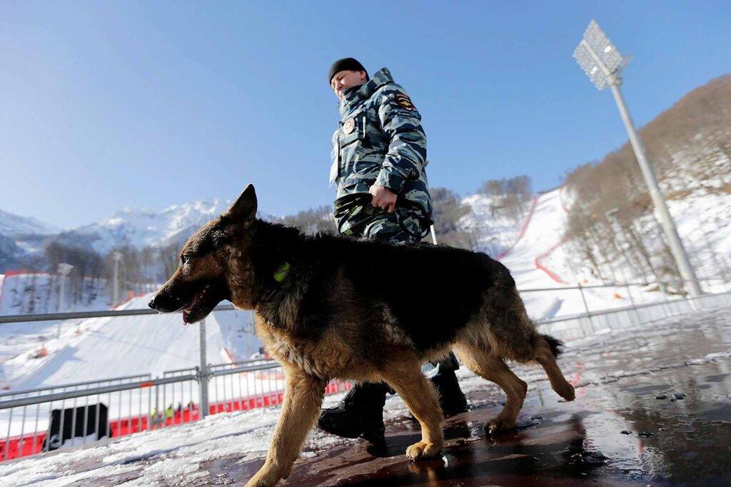 Кинологи со служебными собаками в круглосуточном режиме заняты поиском взрывчатых веществ (5)