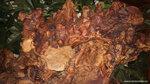 Китайское дерево жизни
