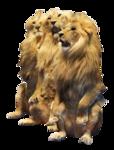 тигры       3.png