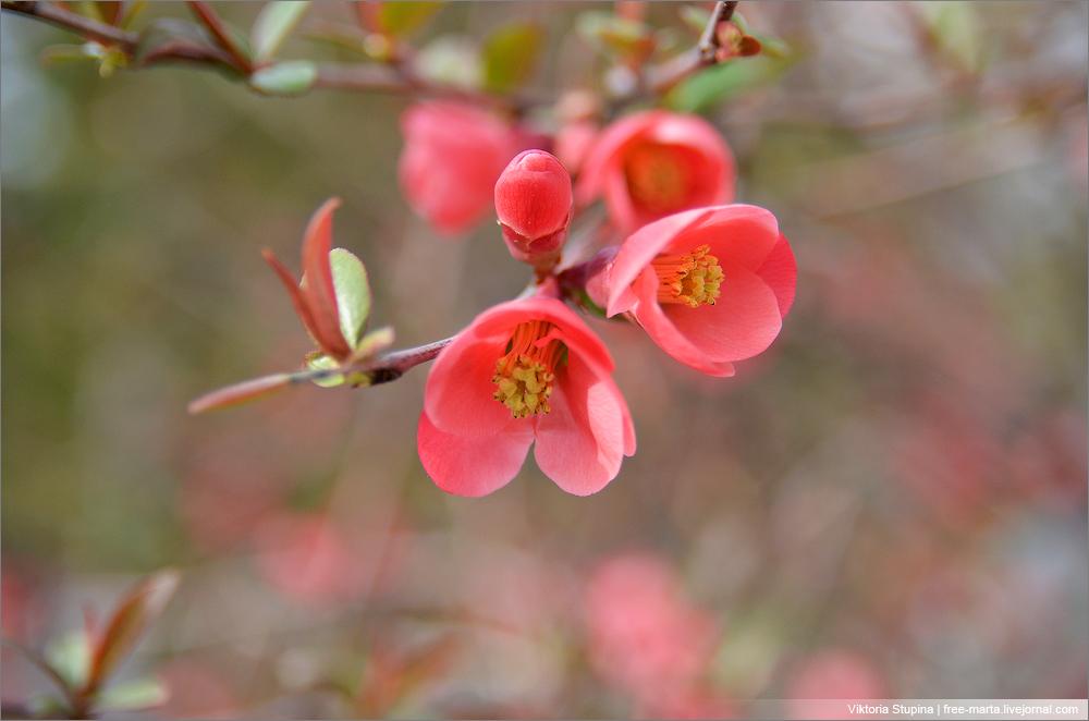 цветы на деревьях