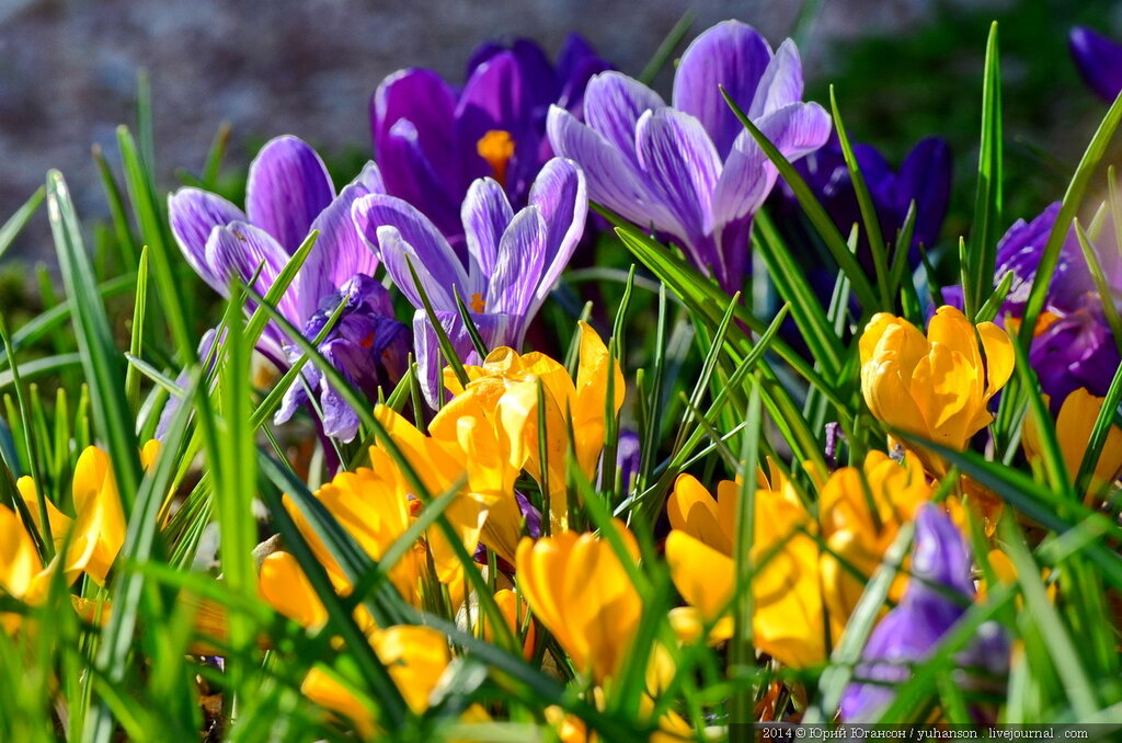 Весенние цветы картинки красивые с названием