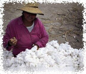 купить шерсть ламы