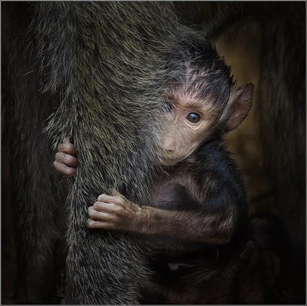 Фотографии животных отлучших фотографов анималистов России 0 145e41 fca2a0ca orig