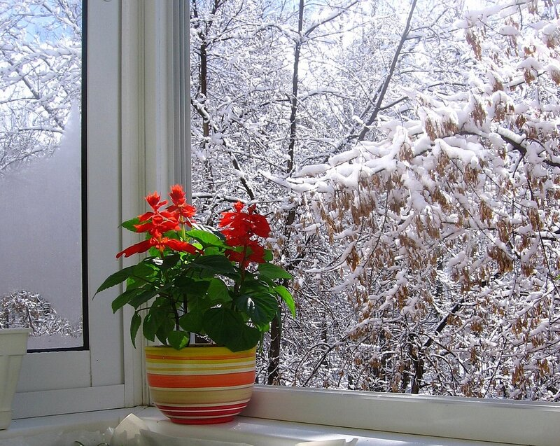 Уральские первоцветы. 24 апреля