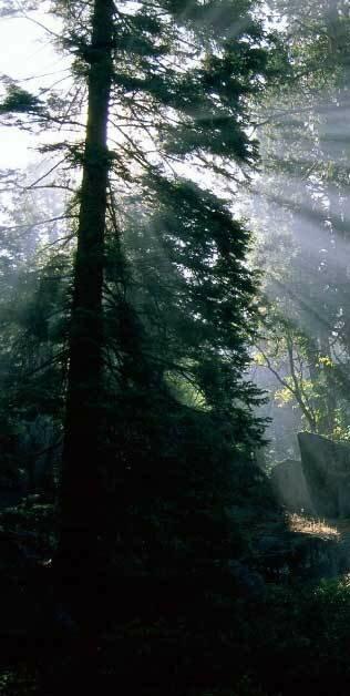 Масштабы вырубки лесов и доступные решения проблемы