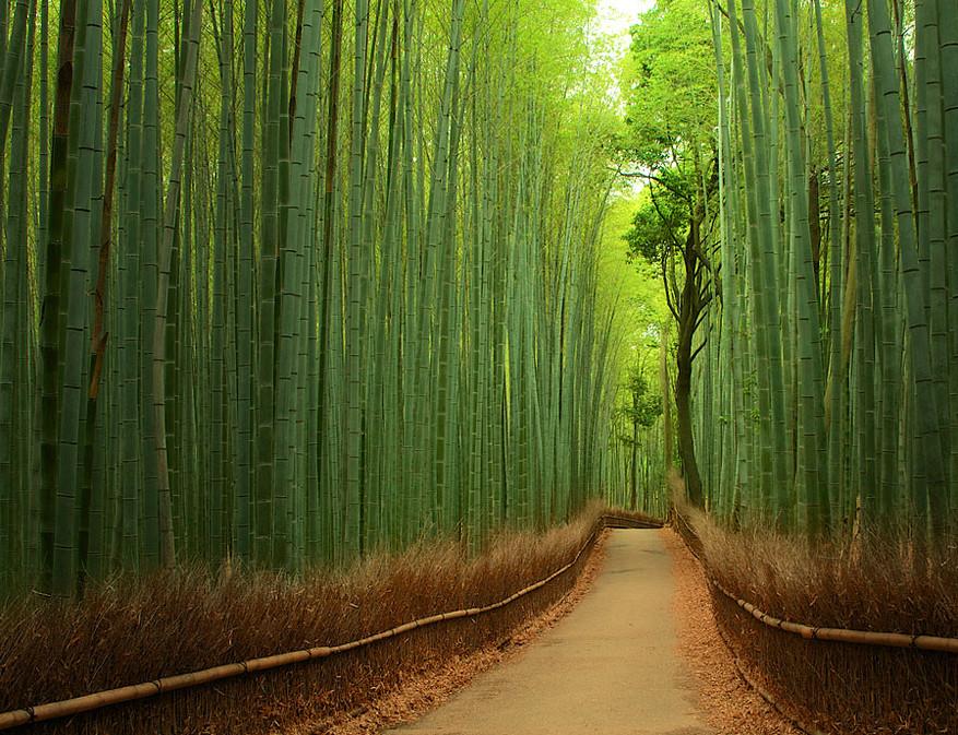 Бамбуковый тоннель в Киото (Япония)