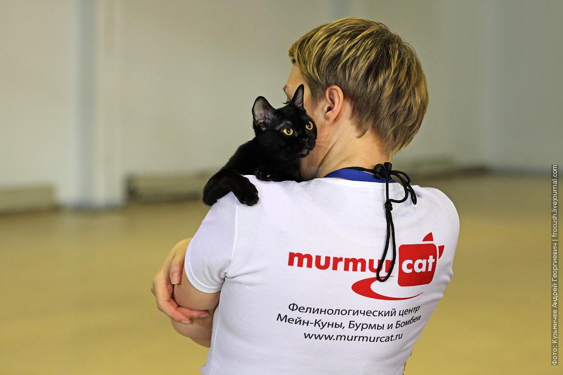 выставка кошек содружество