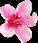 ZlataDesigns_SpringGift (92).png