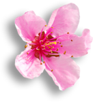 ZlataDesigns_SpringGift (93).png