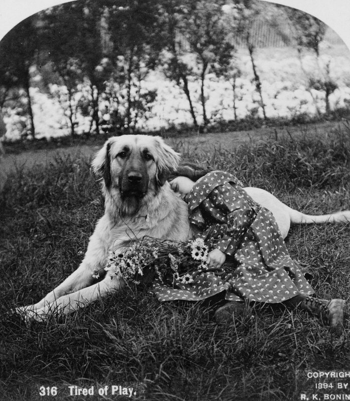Dog tired in the gilded age, 1894
