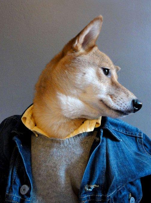 Оригинальный блог модной мужской одежды (10 фото)