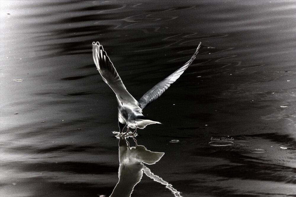 Чайка3.jpg