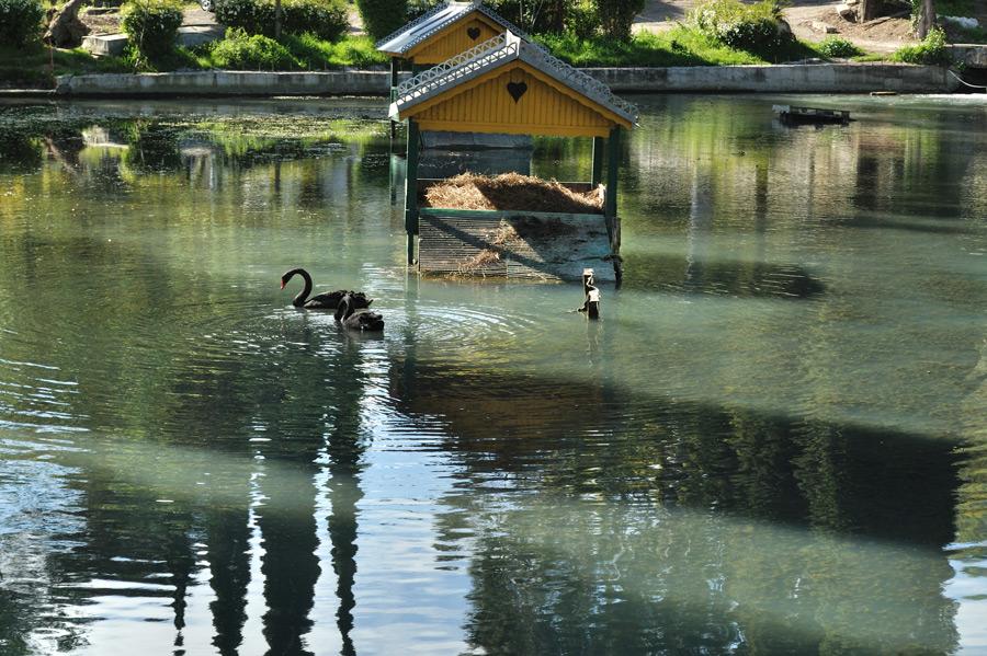 новый афон приморский парк