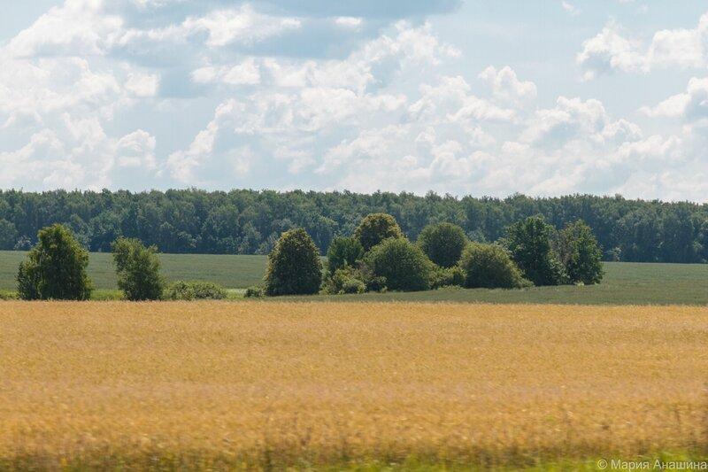 Поле недалеко от Рязани