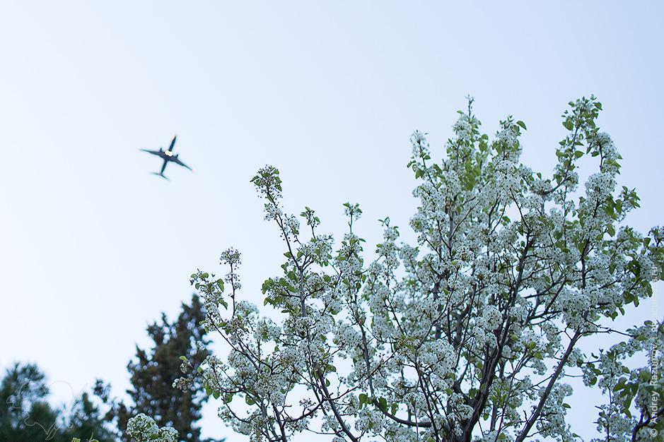 Самолеты в небе