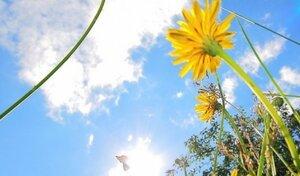 Погода дарит Молдове яркие и солнечные выходные