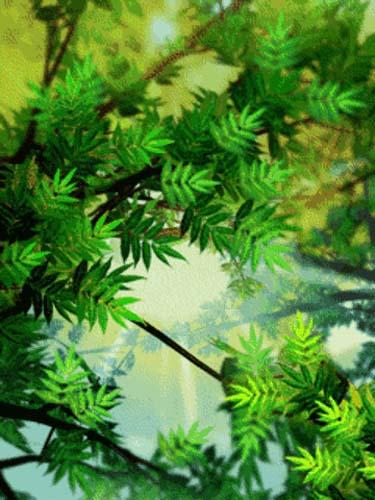 анимация природа на телефон 240х320 № 2080 загрузить